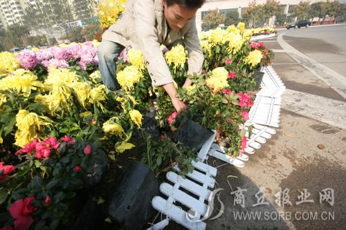 记者正在扶起鲜花,两名骑着自行车的10多岁男孩赶过来,各拿了一盆鲜花