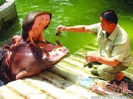 """山东济南动物园:动物""""吃粽子""""过端午"""