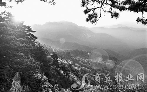 遮天蔽日的原始森林