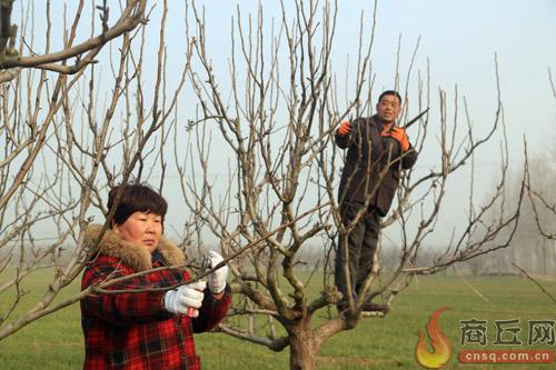 果树冬剪好时机