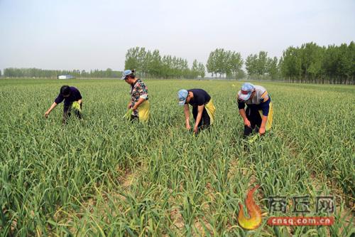 收入证明范本_工资收入证明模板_增加农民收入的意义